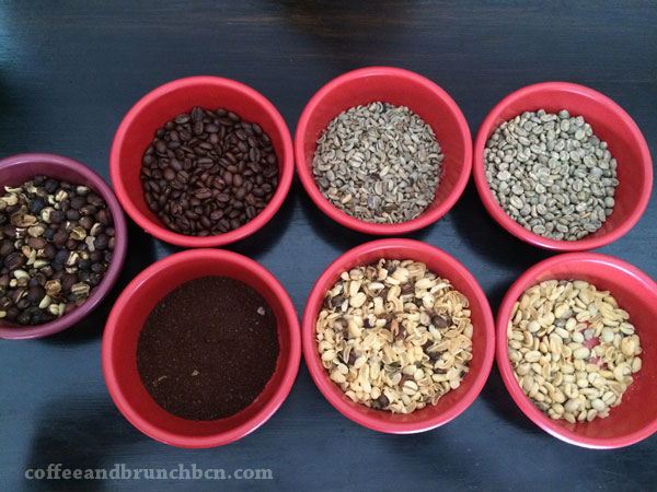 Los granos de cafe en varias fases
